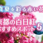 真夏を彩る赤い花、京都の百日紅(サルスベリ)おすすめスポット5選