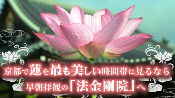 京都で蓮を最も美しい時間帯に見るなら早朝拝観の「法金剛院」へ