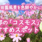 秋の田園風景を色鮮やかに彩る京都の「コスモス」おすすめスポット6選