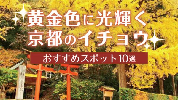 黄金色に光輝く、京都の銀杏(イチョウ)おすすめ黄葉スポット10選