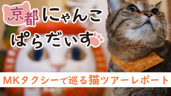 京都にゃんこぱらだいす!MKタクシーで巡る猫ツアーレポート