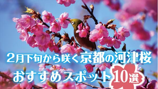 京都で2月に開花する早咲きの河津桜(カワヅザクラ)おすすめスポット10選