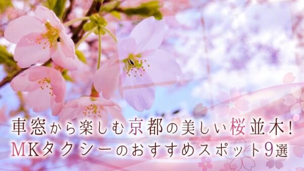車窓から楽しむ京都の美しい桜並木!MKタクシーのおすすめスポット9選