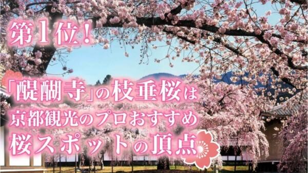 京都観光のプロが選ぶ桜おすすめ第1位!「醍醐寺」の枝垂桜は京都の観光スポットの頂点