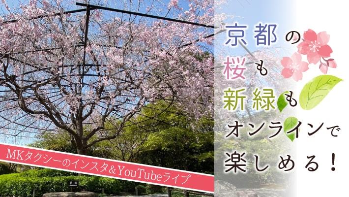 京都の桜も新緑もオンラインで楽しめる!MKタクシーのインスタ&YouTubeライブ