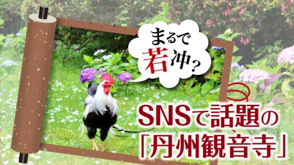 まるで若冲?美しいあじさいとニワトリがSNSで話題の「丹州観音寺」