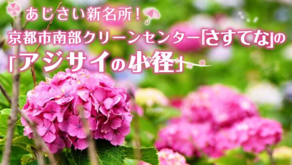 あじさい新名所!京都市南部クリーンセンター「さすてな」のアジサイの小径