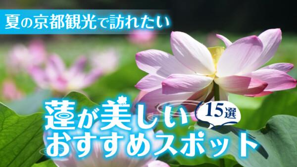 夏の京都観光で訪れたい蓮(ハス)が美しいおすすめスポット15選