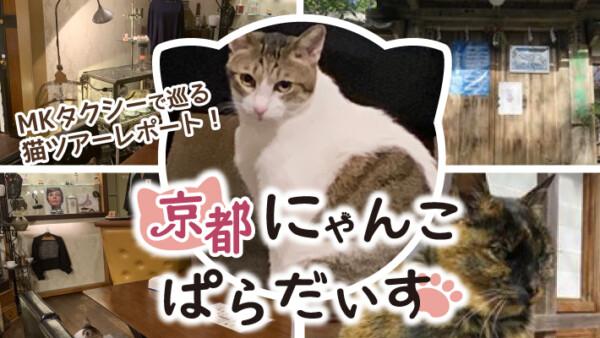 第3回!MKタクシーで京都の猫スポットを巡るツアーレポート!京都にゃんこぱらだいす
