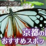 秋の七草のひとつである京都の藤袴(フジバカマ)おすすめスポット8選