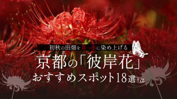 初秋の田畑を真っ赤に染め上げる京都の「彼岸花」おすすめスポット18選+α
