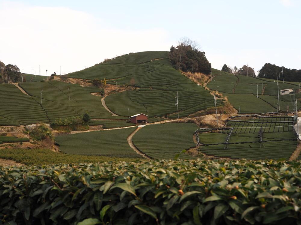 京都府相楽郡和束町の「石寺の茶畑」