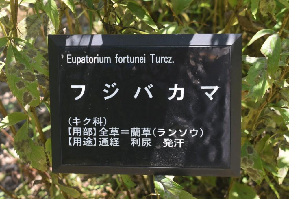 日本最古の薬草園である森野旧薬園 2021年10月15日 撮影:MKタクシー